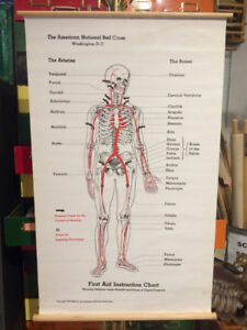 SCHOOL BIOLOGY, ANATOMY AND MEDICAL CHARTS SCIENCE
