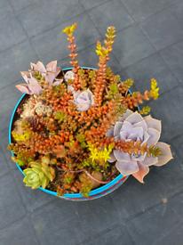 """""""Succulent"""" plants composition"""