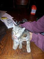 Female kitten!