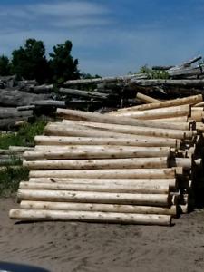Premium Cedar Posts ( Wholesale prices)
