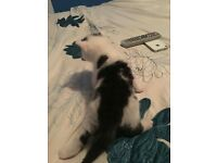 Cute kitten for sale.