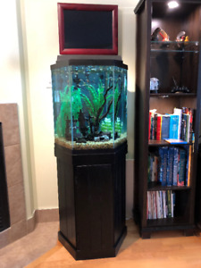 Aquarium 40 gallons
