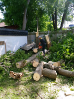 Tree Services and Maintenance