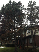 Insured Tree and Stump Removal - Extremely Competitive Pricing