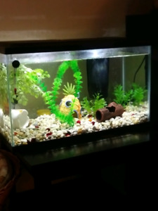 10 gal tank with everything and betta