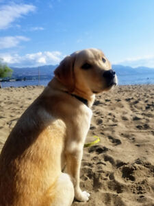 Long-term dog sitter need as going overseas for work