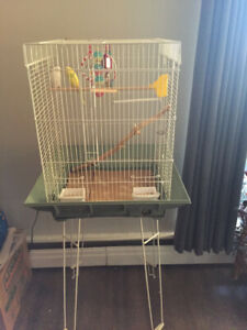 Two budgies and cage.