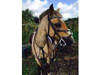 12.2 hacking pony for full or part loan