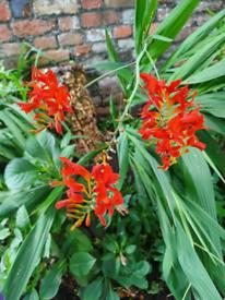 Volunteer gardener's wanted in Easton Bristol