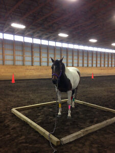 Horse Boarding at Coal Lake Stables Edmonton Edmonton Area image 4