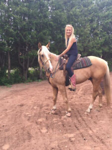 3 year old palomino gelding started undersaddle