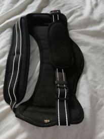 2 dog harnesses
