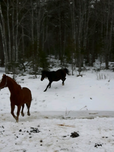 WANTED  semi retired small horse
