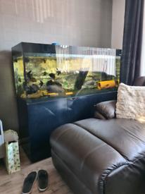 aquael 5ft fish tank and stand