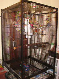 X-Large Parrot Cage