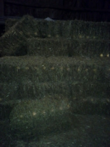 2017 square bales wheat straw