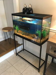 Map Turtle With Full Setup - 7 Months Old