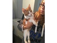 16 week old kittens ginger male other female