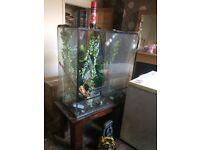 Big glass Reptile Vivarium Tank