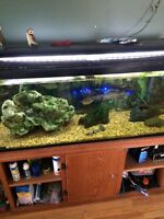 Complete fish tank for sale X2