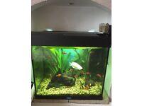 2ft fish tank & fish