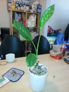 Nice Plant for sale