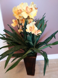 EXOTIC YELLOW ORCHIDS