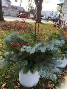 Holiday Outdoor Containers Kawartha Lakes Peterborough Area image 2
