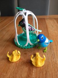 Live pet bird toys