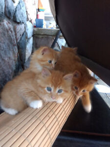 Looking to find a new home for these cute and friendly kittens,