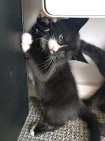 2 kittens available, 2 boys