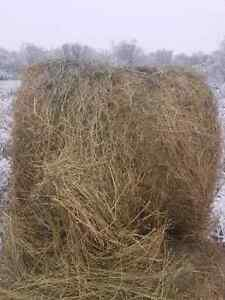 3 yr old hay for sale
