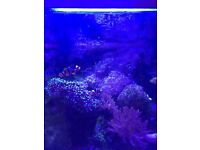 Juwel rio 240 marine fish tank setup, everything you could possibly need! Would rather sell toether