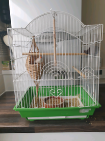 Zebra finches including bird cage and accessories