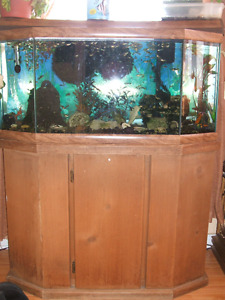 30 gallon Aquarium with stand fish and accessories