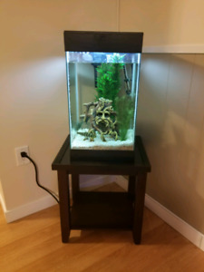 Fish and all supplies for sale!!!
