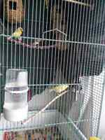Canary and Finches