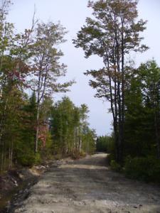 Terre à bois à vendre à Ste-Justine, pour la chasse au chevreuil