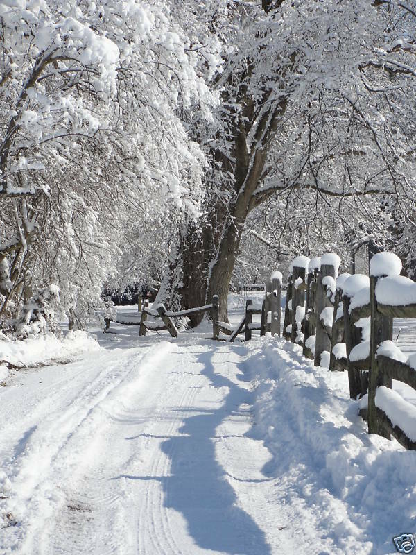 Snowy Sunny Day Country Winter Photography Fence Creek Pure Country Charm Prints