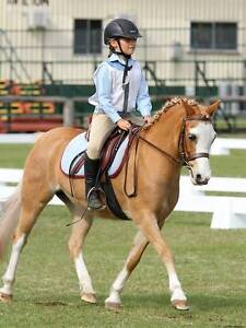 Gorgeous Welsh A all rounder childs pony Worongary Gold Coast City Preview