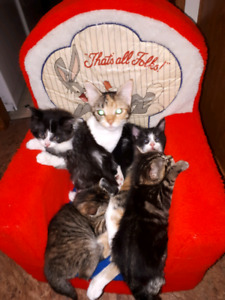 3 adorable kittens FREE to good home