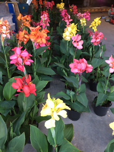 """"""" 25% OR MORE OFF  """"ALL ANNUALS AND PERENNIALS  """" !!!"""