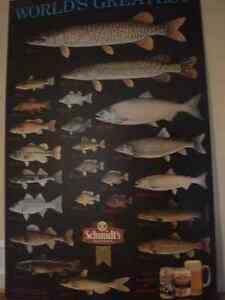 Fish Poster - World largest freshwater fish