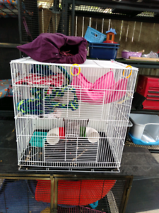 Cage, Rats, birds
