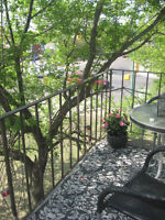 NEWLY RENOVATED 2 BDRM Apartment in Westview!