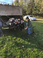 Guided Deer ,Goose, fall Turkey hunts wmu 65 Morrisburg Ontario