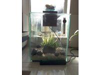 Tropical fish tank set-up