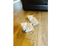 2X ginger boy and girl available