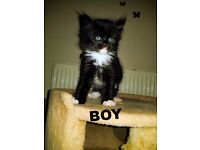 Lovely Kittens for sale ready to go