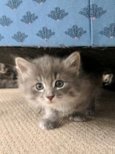 Family raised kittens